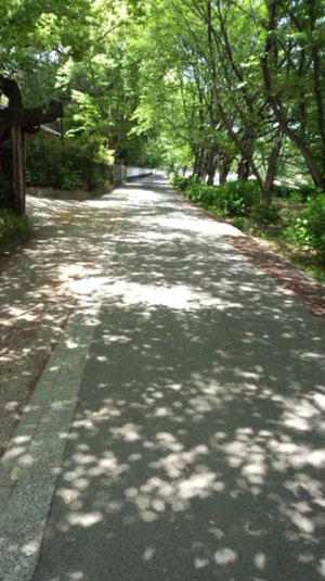 道 後楽園 20130518-2