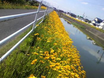 今岡 20100528-2