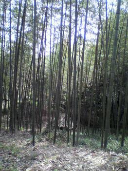 山菜20100418-3