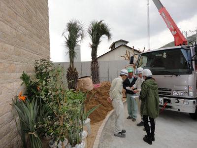 植栽20111117-1