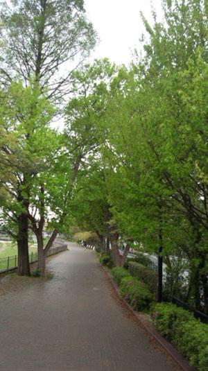 事務所前遊歩道0515-1