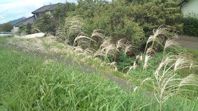 秋 20111002