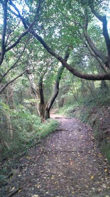 山歩き20111120