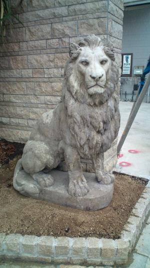 ライオン20120131-2