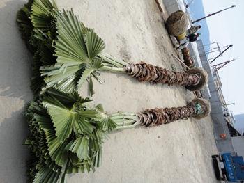 小豆島20110330-1