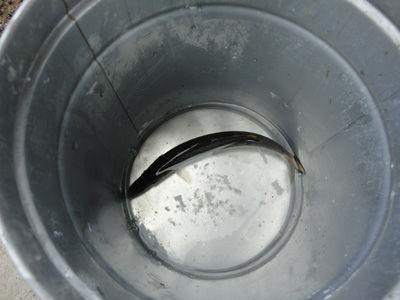 魚20111111