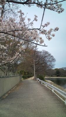 春 20110403