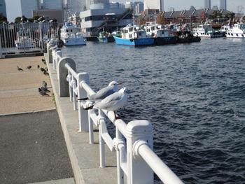 横浜20110304-2