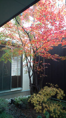 紅葉20111207