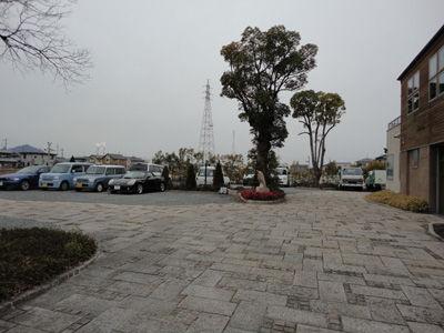 樹 20120510