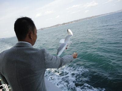 カモメ20111206-1